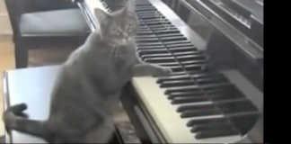 Nora the Piano Cat Catcerto