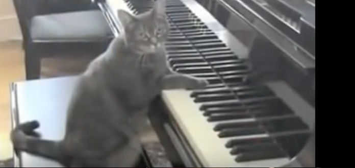 Nora the Piano Cat Catcerto