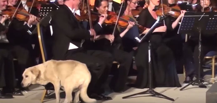 Dog Orchestra